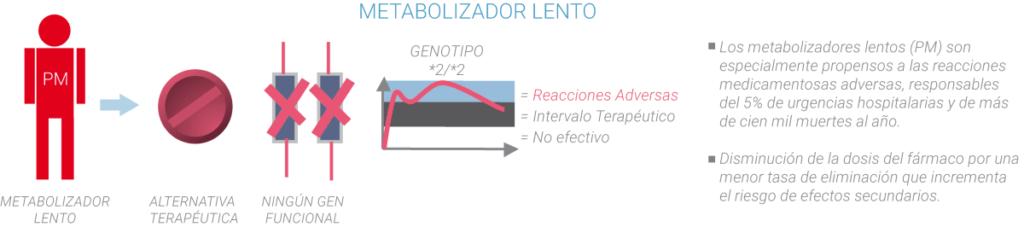 Metabolizadores lento