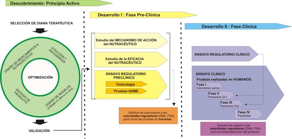 proceso desarrollo pre-clinico